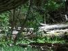 woods landscape Tierra del Fuego (02)