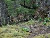woods landscape Tierra del Fuego (04)