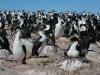 dieren in argentinie aalscholvers