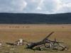 dieren in argentinie guanaco