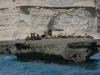 dieren in argentinie zeeleeuwen