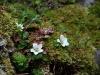 eten-na-de-bloei-wilde-aardbei